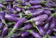 Fairy Tale Eggplant in a New York City Green Market. Vibrant purple and white Eggplan in a bin at the Union Square Green Market in New York City Royalty Free Stock Image