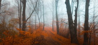 Fairy tale foggy forest during autumn moody morning royalty free stock photos