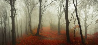 Fairy tale foggy forest during autumn moody morning royalty free stock photo