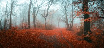 Fairy tale foggy forest during autumn moody morning stock photos