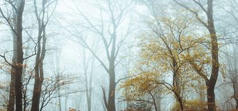 Fairy tale foggy forest during autumn moody morning royalty free stock photography