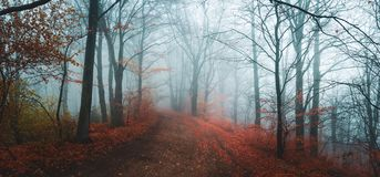Fairy tale foggy forest during autumn moody morning stock photography