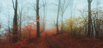 Fairy tale foggy forest during autumn moody morning stock images