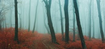 Fairy tale foggy forest during autumn moody morning stock photo