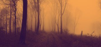 Fairy tale foggy forest during autumn moody morning royalty free stock image