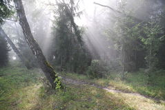 Fairy-tale forest. Solar beams. Foggy morning in a forest stock photo