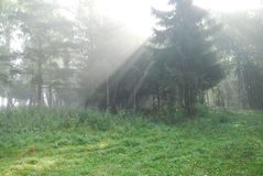 Fairy-tale forest. Solar beams. Foggy morning in a forest royalty free stock photography