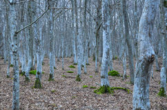 Fairy tale forest Stock Images