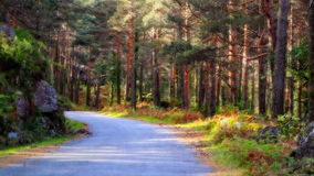 Fairy tale forest Royalty Free Stock Images