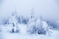 Fairy Tale Forest. Covered with snow. Finnish Lapland Royalty Free Stock Photos