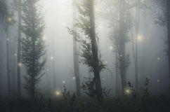 Fairy tale forest with fairies light in mysterious fantasy forest. Fairies with light in mysterious fairy tale forest with fog Royalty Free Stock Photos