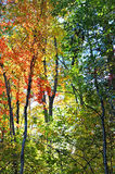 Fairy Tale Forest  in Fall Colors Stock Photo