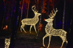 Fairy tale forest with illuminated animals