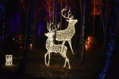Fairy tale forest with illuminated animals stock photos