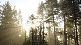 Fairy Tale Forest stock footage