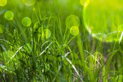 Fairy tale green grass Stock Images