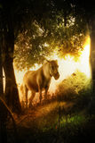 Fairy tale horse. White horse in a fairy tale forest royalty free stock photos