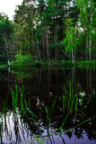 Fairy-tale lake in the forest. Background. Nature Stock Images