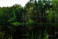 Fairy-tale lake in the forest. Background. Nature Royalty Free Stock Images