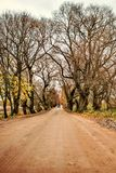 Fairy tale landscape tractor on the road between the arches of trees in the autumn farm village Stock Photography