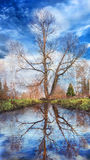 Fairy tale. The lonly tree with stream, Russia royalty free stock photo