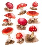 Fairy tale mushrooms pattern Royalty Free Stock Image