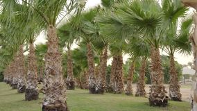 Fairy-tale palm grove on a windy day on a paradise island.  stock footage