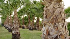 Fairy-tale palm grove on a windy day on a paradise island.  stock video