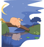 A fairy tale about a pig and a small river Royalty Free Stock Photography