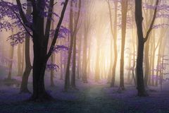 Fairy tale purple fog and leaves in mystic foggy forest trail. Fairy tale fog and leaves in mystic foggy forest trail stock image