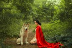 Fairy tale about red cap, dark-haired girl on ground in thick forest in short white light dress, long scarlet cloak. Looks strictly at camera, Alaskan Malamute royalty free stock image