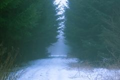 Fairy-tale road in the winter forest royalty free stock photography