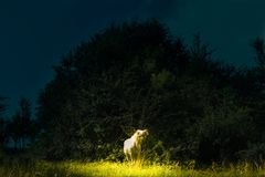 Fairy tale scene with magical white horse yelling  in highlight. Dark background with magic light on the beautiful white horse stock photography