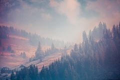 Fairy tale scenery in purple shades. Carpathians. Royalty Free Stock Photography