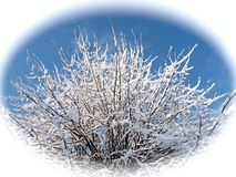 Fairy-tale snowy branches of a lime tree against blue sky in white circle Royalty Free Stock Photos