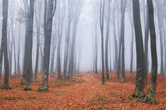 Fairy tale trail in foggy forest Royalty Free Stock Photography