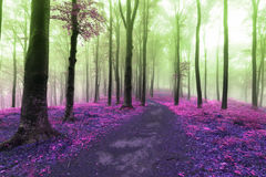 Fairy tale trail into the forest. Magical colors of other worlds Royalty Free Stock Photo