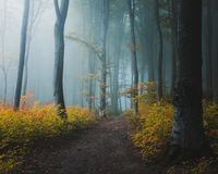 Fairy tale trail in mystic foggy forest. Light entering the woods. Yellow leaves and blue light stock image
