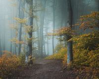 Fairy tale trail in mystic foggy forest. Light entering the woods. Yellow leaves and blue fog royalty free stock photo