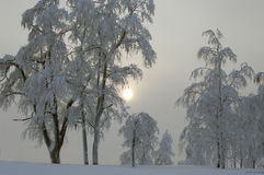 Fairy tale of winter forest Royalty Free Stock Images