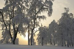 Fairy tale of winter forest Royalty Free Stock Photography