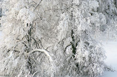 Fairy tale of winter forest Stock Photography