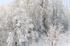 Fairy tale of winter forest Royalty Free Stock Photos