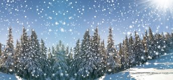 Fairy tale winter landscape. Pine trees with snow and frost on m royalty free stock image