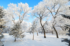 The fairy tale world. The photo was taken in forest park  Daqing city Heilongjiang province,China Stock Image