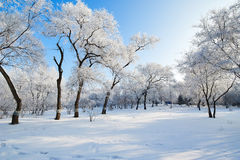 The fairy tale world in the winter. The photo was taken in forest park  Daqing city Heilongjiang province,China Royalty Free Stock Photos