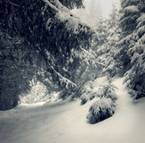 Fairy-tales snowfall in winter forest Stock Photography