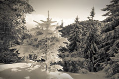 Fairy-tales snowfall in winter forest. Stock Photos