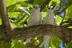 fairy terns пар Стоковое Изображение RF