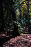Fairy tree Stock Photos